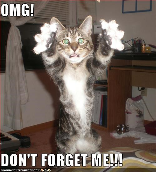 Omg Dont Forget Me Cheezburger Funny Memes Funny Pictures