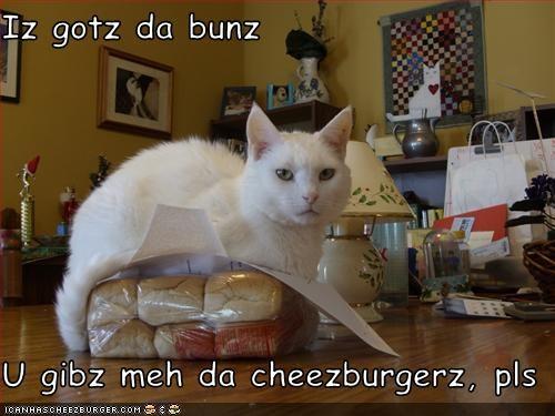 Cheezburger Image 2945960192