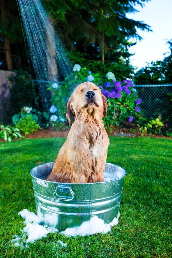 a funny photo of a dog sitting in a tin bin and having the a hose rinse him down like a shower head - cover for a list of funny dog shower thoughts
