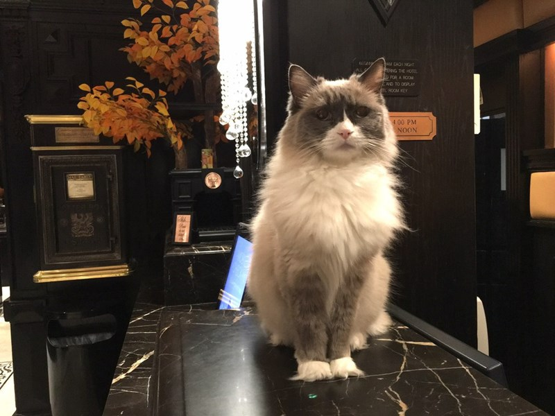 cat resigns her job at NY hotel