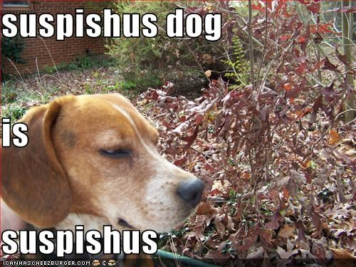 suspishus dog is suspishus