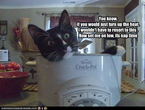 nap pot warm - 2948707328