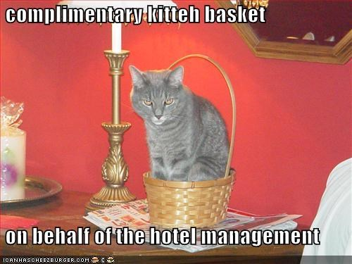 Complimentary Kitteh Basket On Behalf Of The Hotel Management