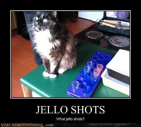 bad,cat,jelly shots,funny