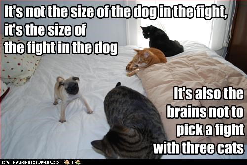 It's not the size of the dog in the fight, it's the size of the fight in the dog It's also the brains not to pick a fight with three cats