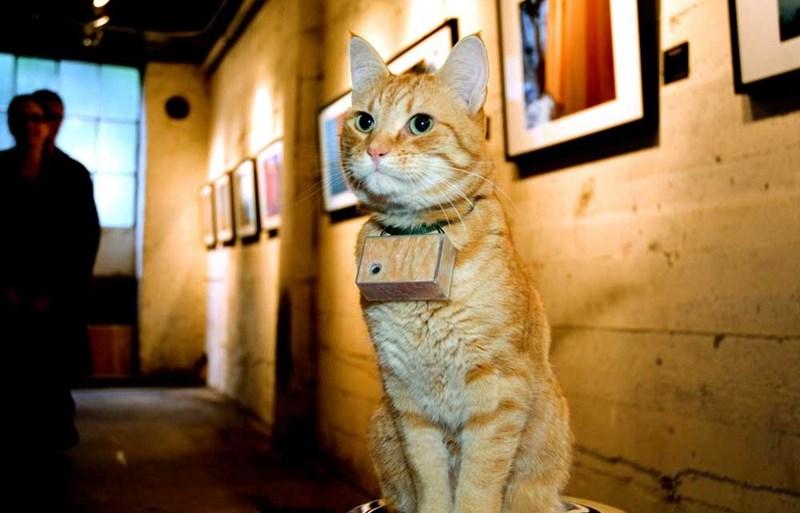 photographer takes cat photos of the world around him