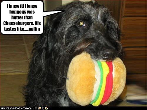 Cheezburger Image 2951972096