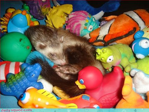 cute,ferret,nap