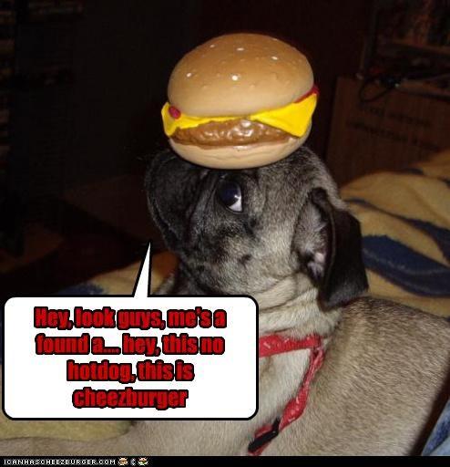 Cheezburger Image 2952064000