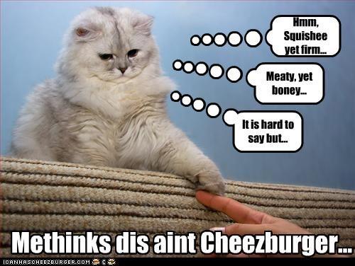 Cheezburger Image 2952793856