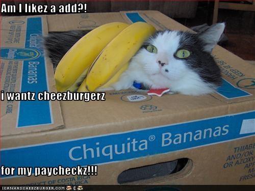 Cheezburger Image 2953059584