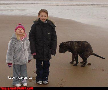 Animal Bomb,beach,dogs,poo