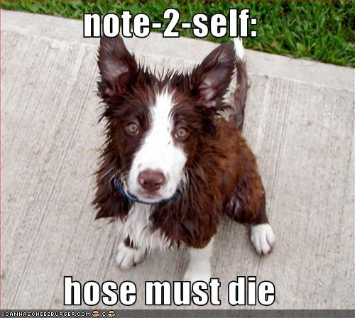 angry,border collie,die,hose,note,water,wet