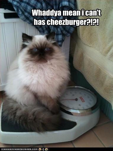 Cheezburger Image 2953986048