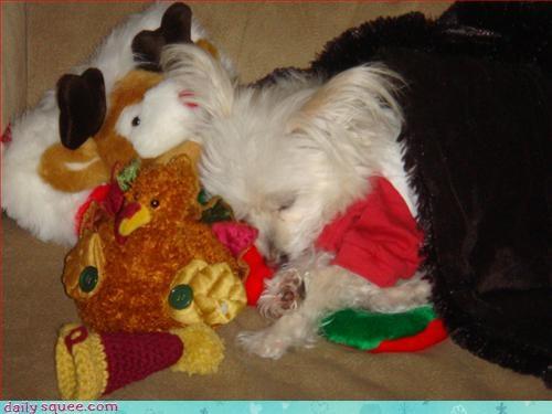 christmas dogs santa - 2954242816