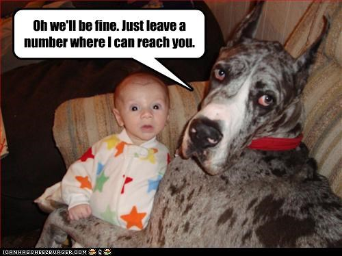 baby babysitting great dane human - 2954303488