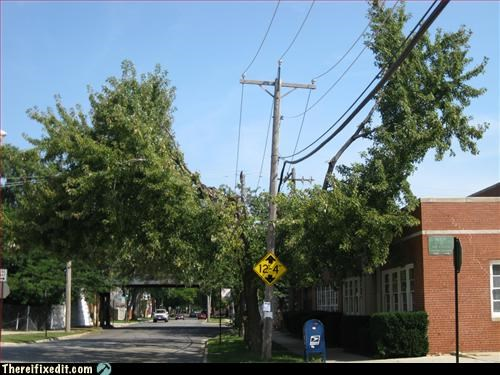 nom,power lines,Professional At Work,tax dollars at work,tree