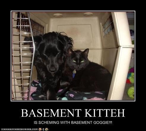BASEMENT KITTEH IS SCHEMING WITH BASEMENT GOGGIE!!!