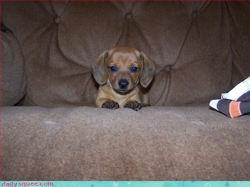 cute puppy weiner - 2955056128