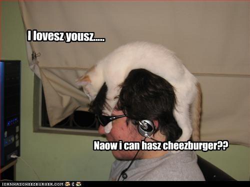Cheezburger Image 2955153408