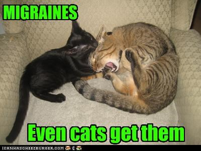 MIGRAINES Even cats get them