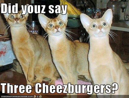 Cheezburger Image 2955950592