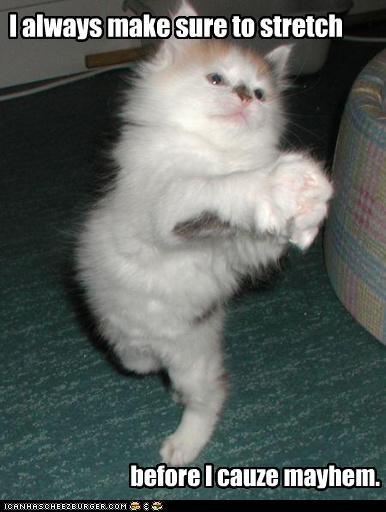 bad cat cute kitten mischief - 2956011520