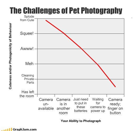 batteries button camera cute finger Line Graph pets photography room waiting - 2956083200