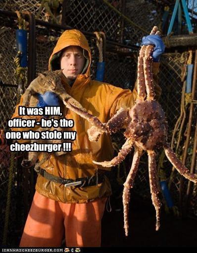 Cheezburger Image 2956166656