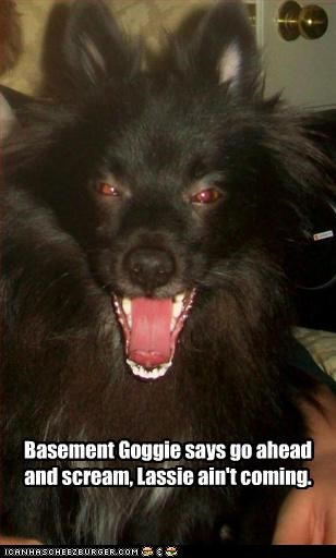 basement lassie scary scream whatbreed - 2956566784