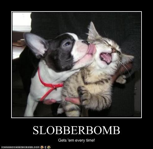 SLOBBERBOMB Gets 'em every time!