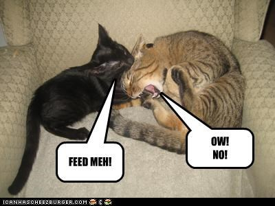 FEED MEH! OW! NO!