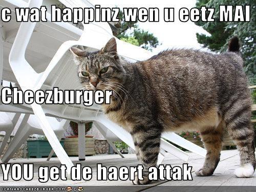 Cheezburger Image 2957512960