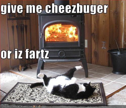 Cheezburger Image 2957639936