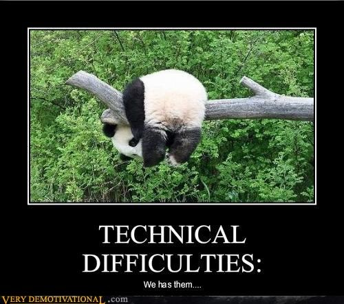 funny picture of a panda that is stuck in the tree like a big furry goofball.