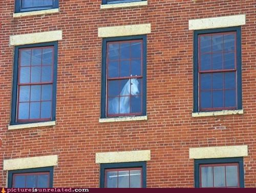building horse judgement window wtf - 2958898688