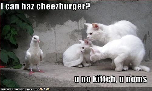 Cheezburger Image 2959155200