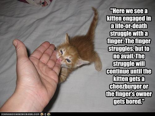Cheezburger Image 2959189760