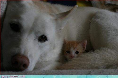 cat,dogs,mom