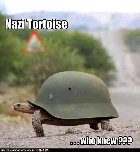 Nazi Tortoise . . . who knew ???