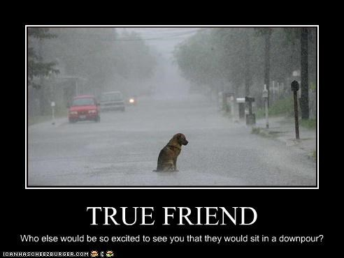 TRUE FRIEND Who else would be so excited to see you that they would sit in a downpour?