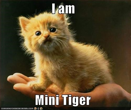 cute fierce kitten tiger - 2962375936