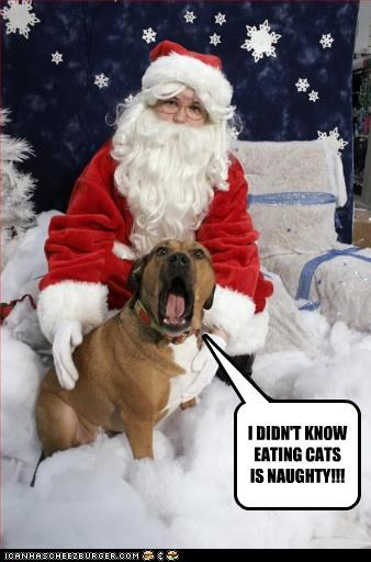 eating,lolcats,naughty,pitbull,santa,shock