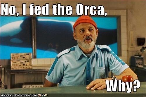 bill murray,orca,the life aquatic with steve zissou