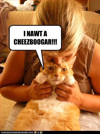 Cheezburger Image 2963730944