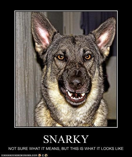 face german shepherd look meaning snarky