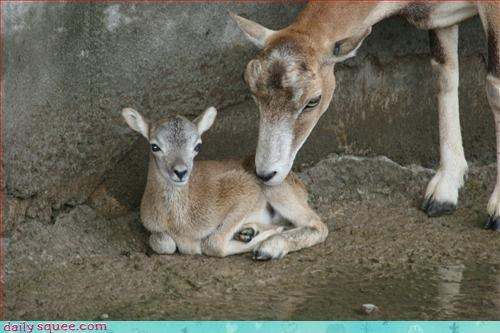 baby,cute,mom