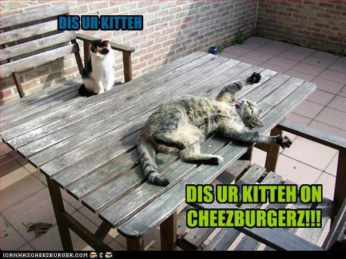 Cheezburger Image 2965799680