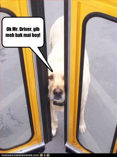 back boy bus care drive give labrador mans-best-friend school watch - 2966121472