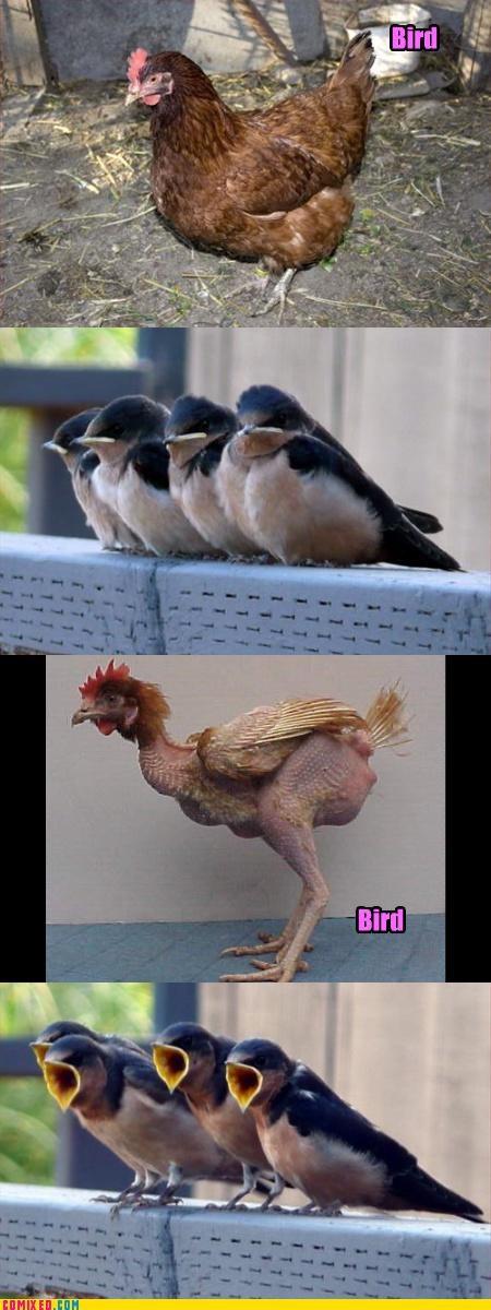 birds clones reaction guys reation guys - 2966273536